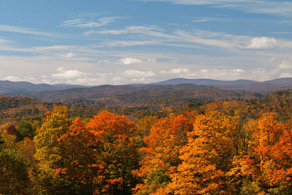A view of trees in fall foliage colors in the foreground with the Green Mountain range and blue sky with puffy clouds in the background.