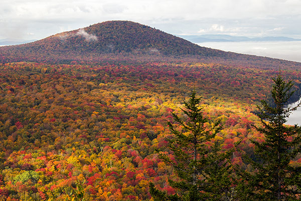 A beautiful valley of forested land during peak foliage season.