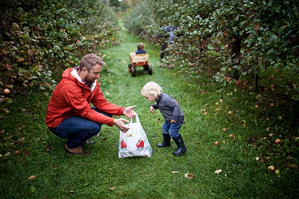 A father and son pick apples.