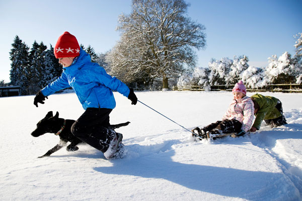 Kids Playing in the Snow, Sledding with the dog