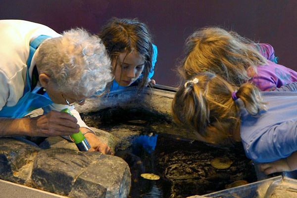 A group of kids enjoy the interactive touch tank at the ECHO, Leahy Center for Lake Champlain.
