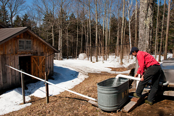 Step 4 of the process is transfer the sap to a holding tank.