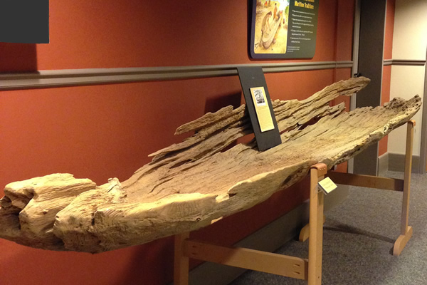 archaeological remains of a dugout canoe on display at the Archaeology Center