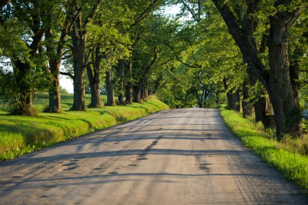 Tree lined roadway in East Burke, Vermont